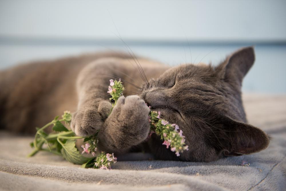 寝る前にも使える!朝までグッスリ眠れるおすすめアロマの選び方